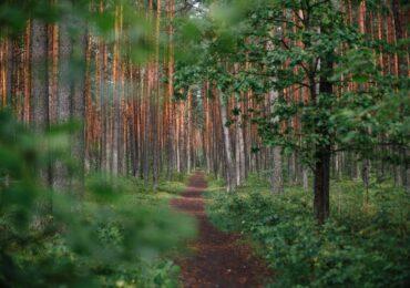 22.05.2021 – Waldgottesdienst Stützengrün